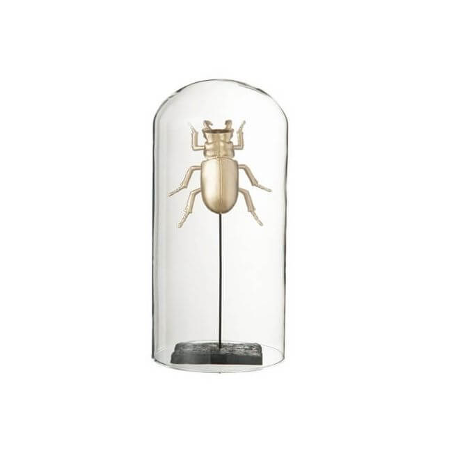 insecte dor sous cloche en verre pas cher. Black Bedroom Furniture Sets. Home Design Ideas