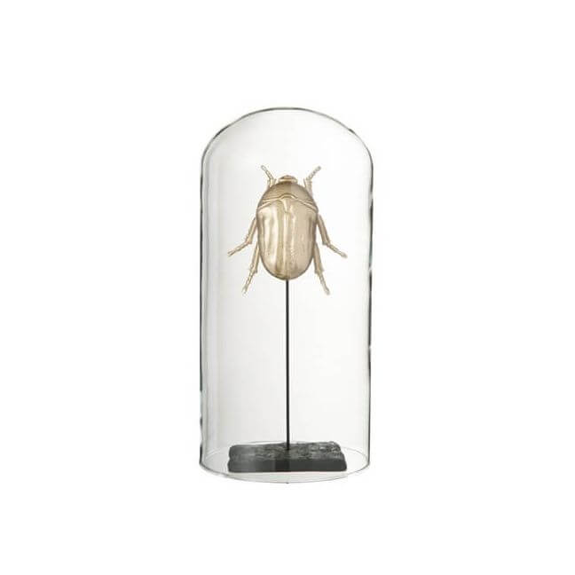 insecte dor avec socle sous cloche en verre. Black Bedroom Furniture Sets. Home Design Ideas